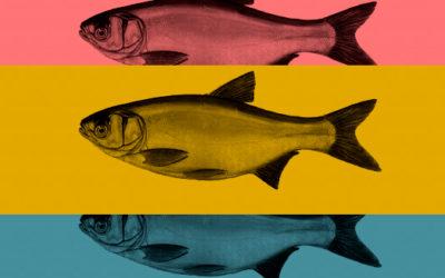 Historia z rybą w tle – czyli w czym tkwi moc najskuteczniejszych preparatów anti-aging na świecie