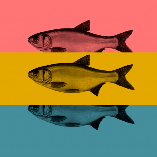 History of fish in the background – in other words, where does the power of the most effective anti-ageing preparations in the world come from