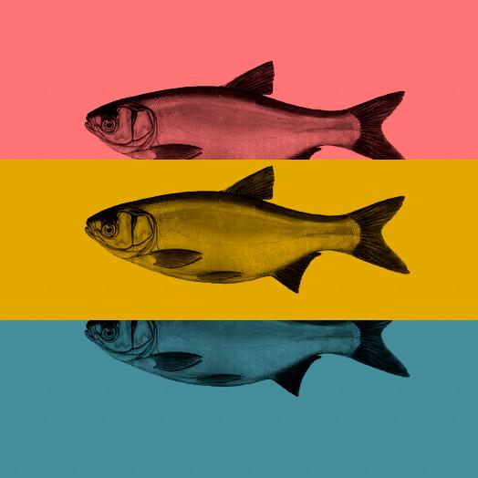 Příběh s rybou v pozadí nebo v čem spočívá síla nejúčinnějších anti-aging přípravků na světě