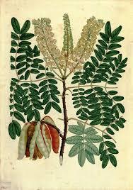 drzewo-tara